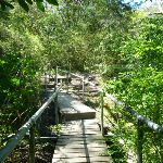 Bridge and boardwalk near the junction of Flaggy and Tin Hate Creeks (338158)