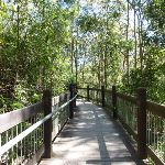 Yuelarbah tree top board walk (338413)