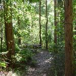 Nice picnic area beside Yuelarbah Walking Track (338425)