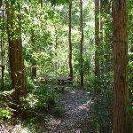 Nice picnic area beside Yuelarbah Walking Track (338425)