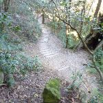step track below Leichhardts Lookout (339394)