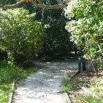 Walking through Kelly's Bush (342628)