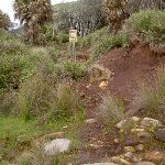 path up from beach (34301)