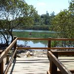 Mangrove viewing platform (344761)