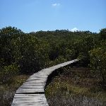 Kitty Creek boardwalk (345571)