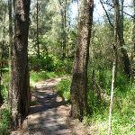 Fairyland Boardwalk (346177)
