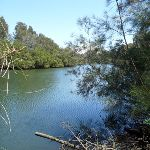 Lane Cove River at Fairyland (346210)