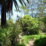 Mix of plants at Fairyland (346225)