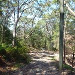 Walking along the rocky trail near Bradfield Rd (346906)