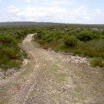 Mowlee Trail (34850)