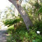Lush gully on trail near Naa Badu Lookout (352142)