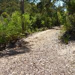 Int of Great North Walk and Berkeley Close service trail  (352493)