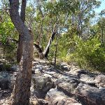 Rocky section west of Currawong Road track (353081)