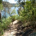 Walking alongside Berowra Waters Creek (353657)