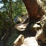 Rocky track  Beside Berowra Creek (354251)
