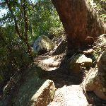 Rocky track  Beside Berowra Creek (354251)