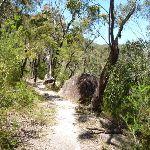 Some welcome flat ridge walking east of Deep Bay creek (354836)