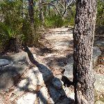 Walking east of the Ridge top campsite (355418)
