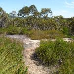 Track at a rockplatform west of Joe Crafts Creek (355547)