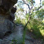 Rock walk west of Joe Crafts Creek (355778)