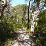 Sandy track west of Joe Crafts Creek (355853)