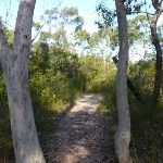 Scribbly gums west of Glendale Road (356405)
