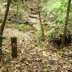 Trail On the Great North Walk (360002)