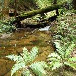 Wallis Creek on The Great North Walk (360017)