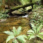Wallis Creek on The Great North Walk (360017)