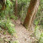 Wallis Creek Valley (360062)