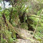 Bird Nest Ferns (360092)