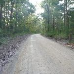 Watagan National Park Heatons Road (360929)