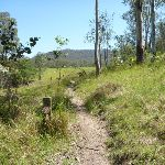 Great North Walk Path in Congewai Valley  (362042)