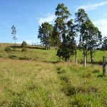 GNW heading through the open farm land (362300)