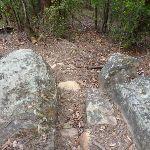Rocky track Olney State Forest (364106)