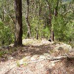 Rocky track Olney State Forest (364115)