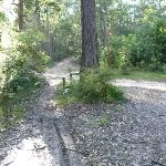 An unsealed trail meets Walkers Ridge Road (365255)