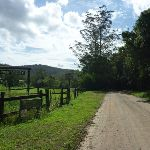 Walking along Ourimbah Creek Road beside Hidden Valley (369622)