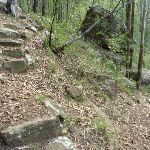 Rock steps in Palm Grove NR (369838)
