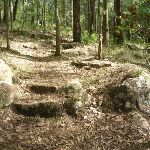 The track on the north side of the ridge in Palm Grove NR (369853)