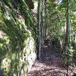 Walking along a mossy rock wall in Palm Grove NR (370051)