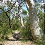 Gorgeous heath and eucalypt forest (372190)