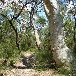 Gorgeous heath and eucalypt forest (372190)