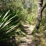 Walking among the gymea lily plants (372292)