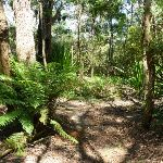 Pleasent ferny gully east of the Lower Mooney Mooney Dam (372304)