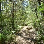 The old trail east of the Lower Mooney Mooney Dam (372610)