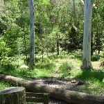 The pleasent northern Mooney Mooney Creek (373270)