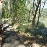 Boardwalk beside Piles Creek (374083)