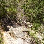 Rocky track in Lyrebird Gully (376487)