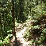 Ferny section of Lyrebird Gully (376679)